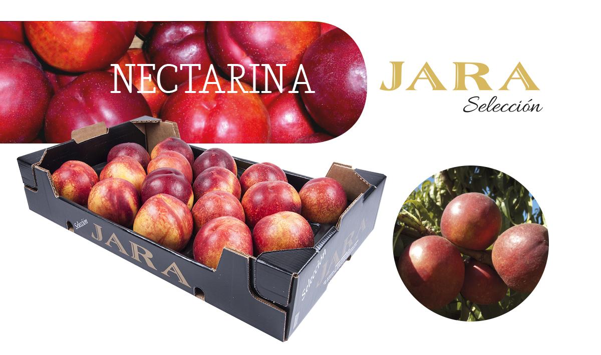 Nectarina Jara Selección