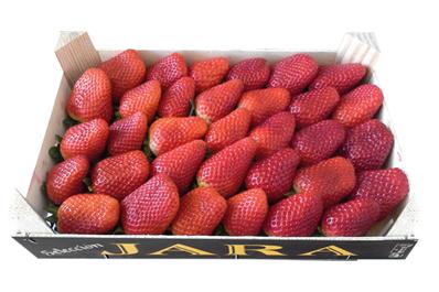 Caja fresas Jara selección
