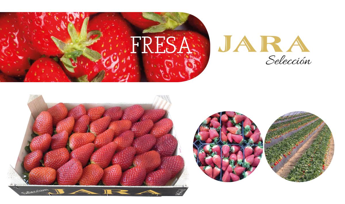 Fresas Jara Selección