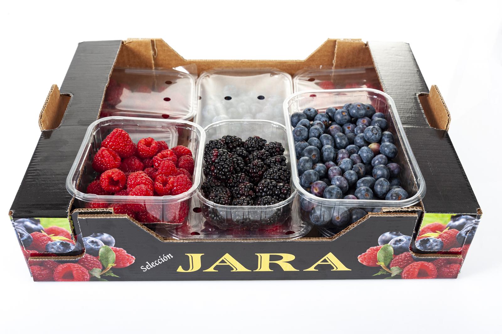 Berrys Huerta Campo Jara - Mora, Frambuesa y Arándano